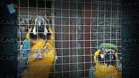 Papagáje na montáži