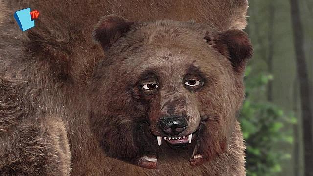 Animoterapia - 08 - Medvede